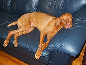 Click image for larger version.  Name:7. Resting on the counch -  8 months.jpg Views:7 Size:80.7 KB ID:373