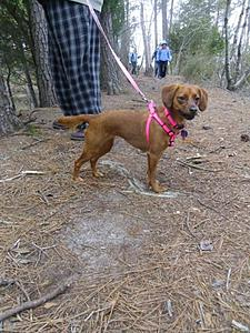 Click image for larger version.  Name:CharlotteHiking.jpg Views:117 Size:98.4 KB ID:379